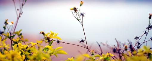 Paradies Blumen